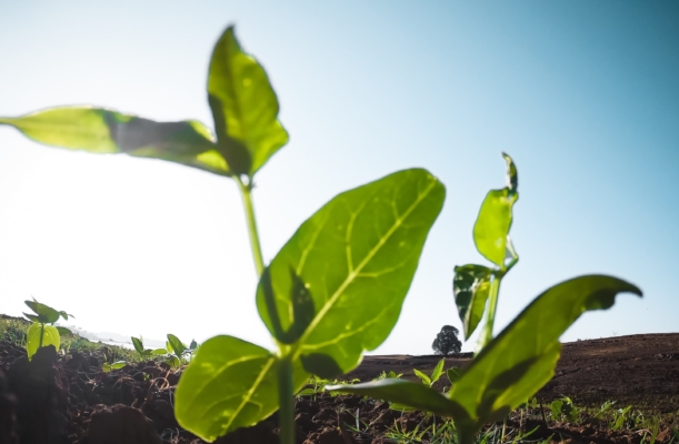 Grønn plante i næringsrik jord
