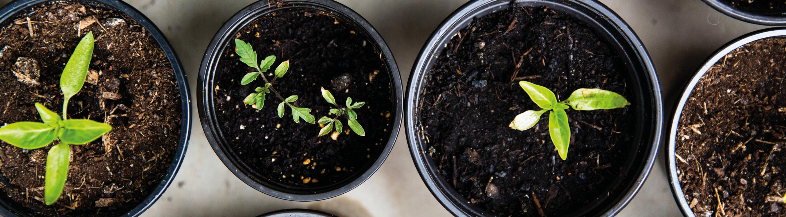 Grønne planter dyrket i næringsrik jord